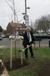 The Leader of the council Councillor Stephen Alambritis, helps to replant a tree damaged in the storms of last year